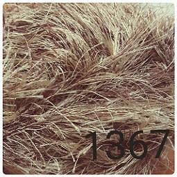 AGORA-079